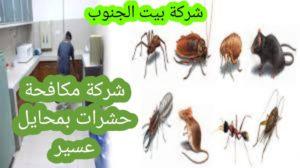 شركة مكافحة حشرات بمحايل عسير