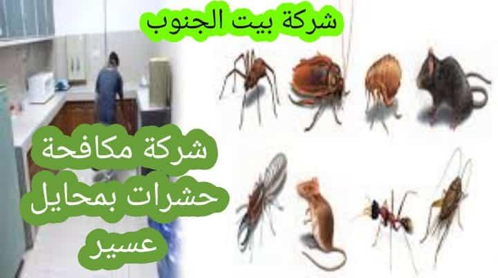 Photo of شركة مكافحة حشرات بمحايل عسير 0538857370 مع الخصم والضمان 12 شهراً